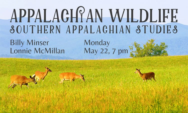 Appalachian Wildlife